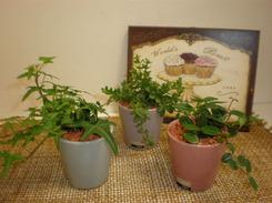 観葉植物 003
